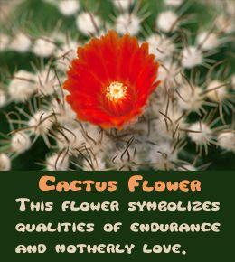 List of Flower Names with Meanings and Pictures