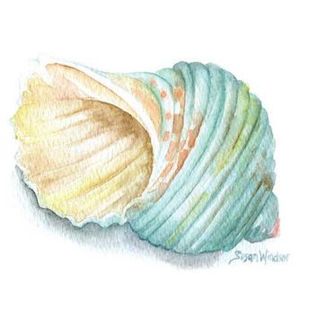 Image result for watercolour paintings of shells