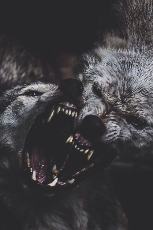 wkurzone wilczki:D