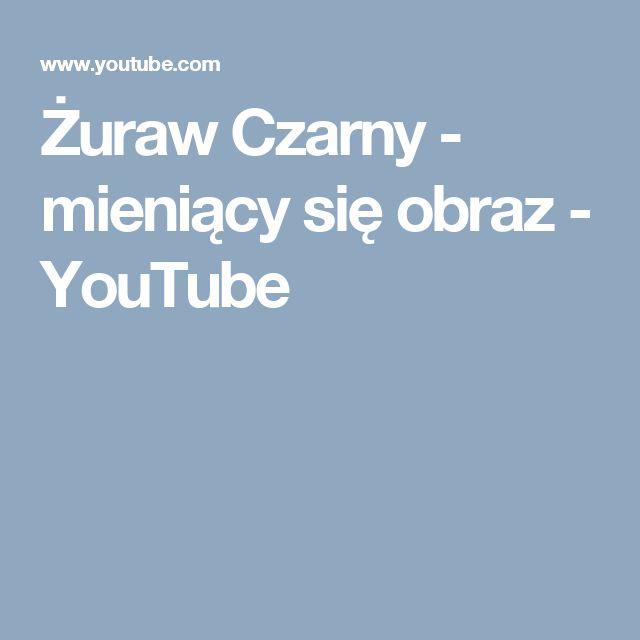 Żuraw Czarny - mieniący się obraz - YouTube