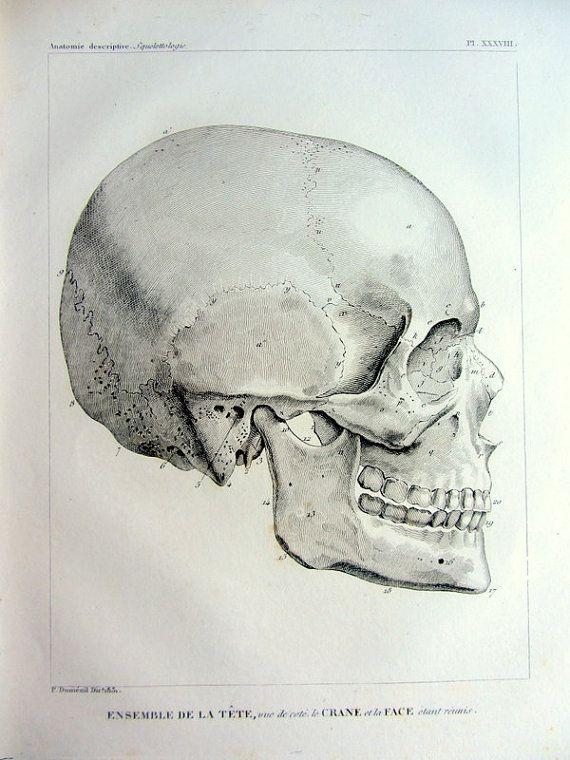 Vue côté antique curieux de 1831 du crâne gravure, anatomie vintage original imprimer, illustration crânienne de squelette bones tête oodity...