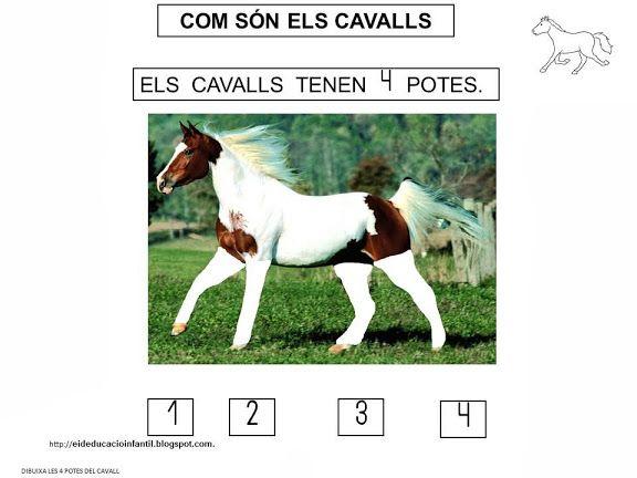 PROJECTE EL CAVALL - m.àngels t - Álbumes web de Picasa