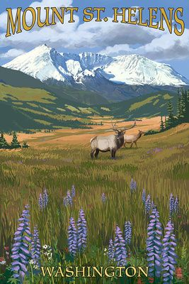 Mount St. Helens, Washington - Elk and Meadow - Lantern Press Poster