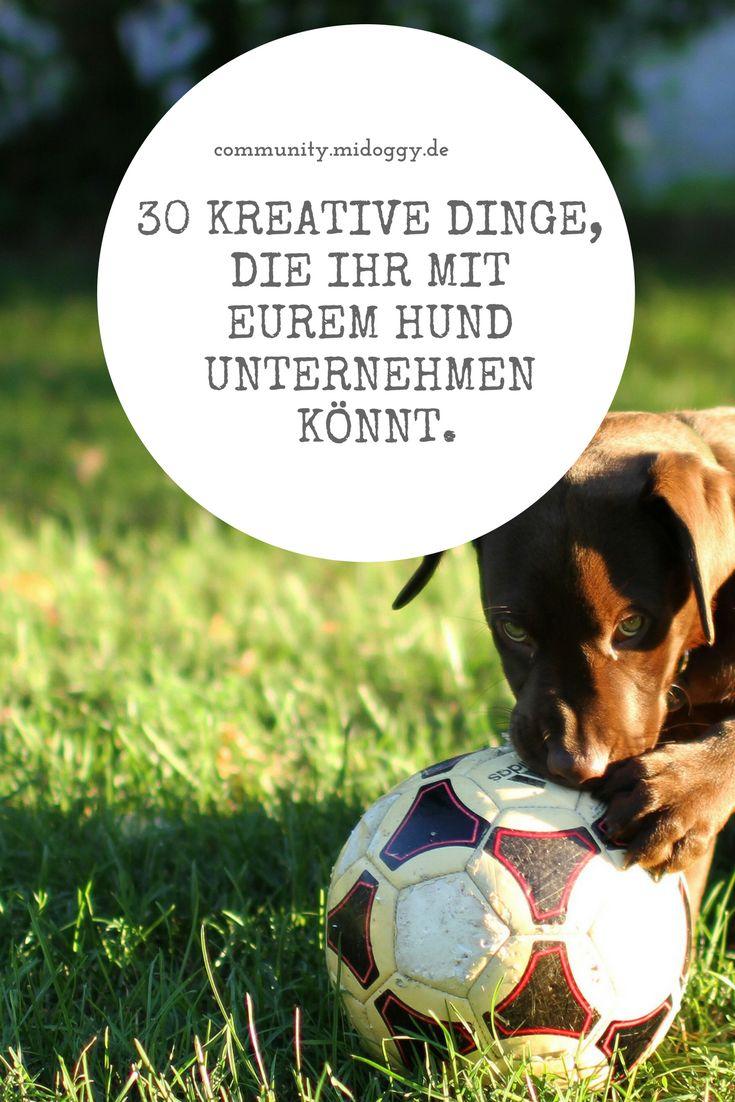 || #Hund || Ideen || #Hunde || Tipps || Tricks || Ideen || Liebe || Welpen || Bilder || #Beschäftigung