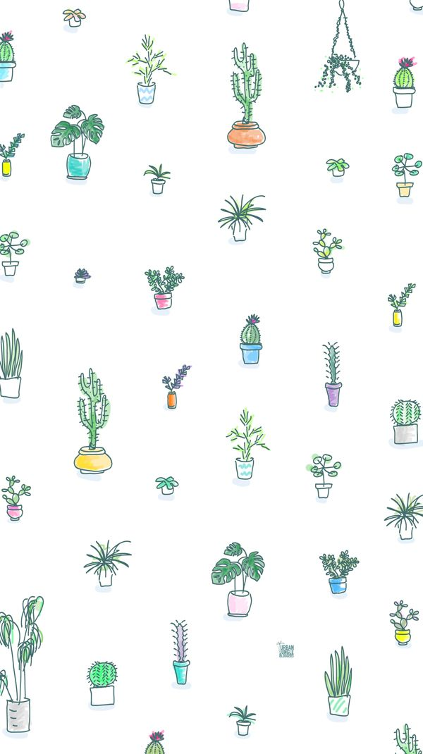 illustration | cactus + succulents wallpaper
