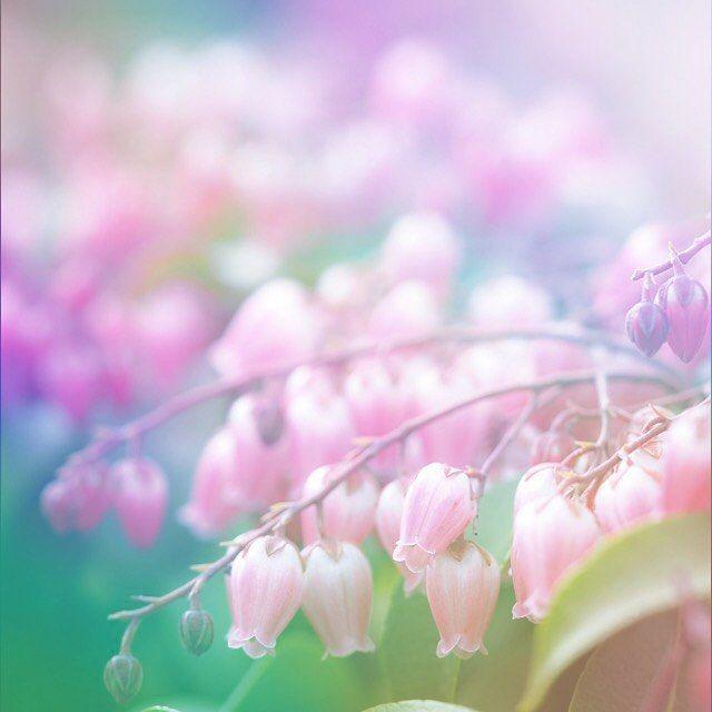 おはようございます♪ 冷え込んでますが、すこーし薄日が差してきました(^-^) 馬酔木も可愛いく咲き始め 春のお花が楽しみになってきましたね✨ さぁーて、、 今日も良い一日になりますように 頑張っていきましょ〜*\(^o^)/*
