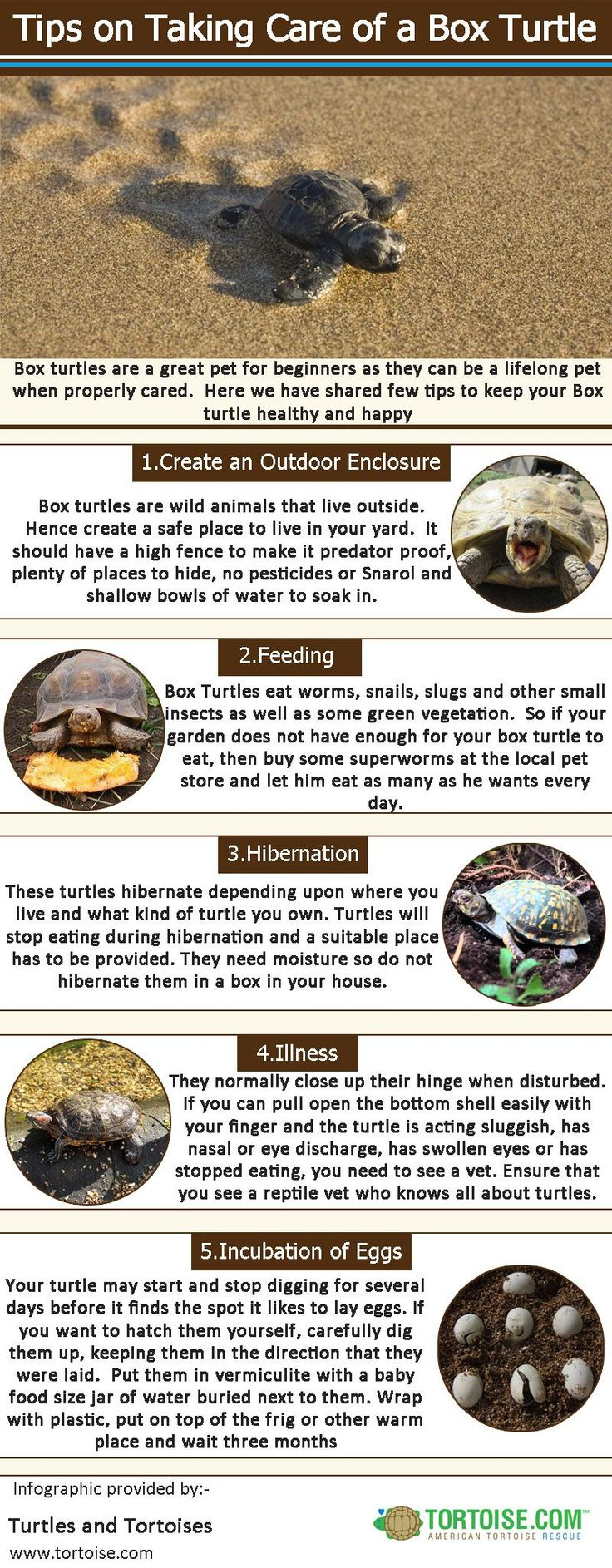 Box turtles are a great pet for beginners as they can be a