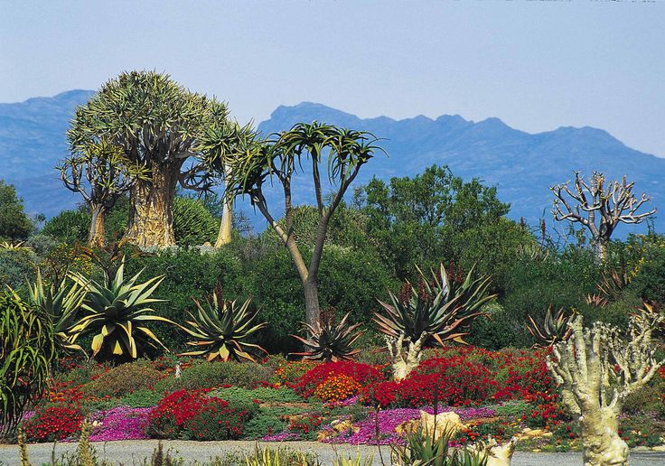 Worcester Karoo Gardens - South Africa