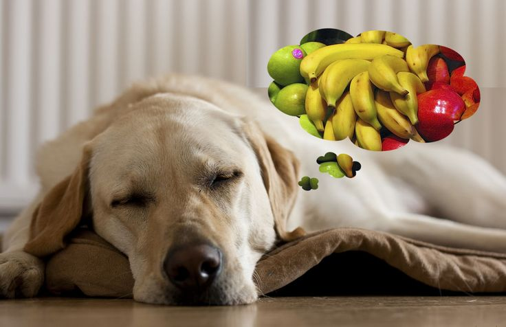 Maneras de tratar naturalmente el mal aliento de perro Aquí hay cinco cosas naturales y fáciles que puede hacer ahora mismo para prevenir y curar el mal aliento en los perros. Cortar los carbohidratos Menos carbohidratos y menos azúcares significan menos alimento para que las bacterias de la boca prosperen. Los alimentos pegajosos, gomosos, dulces …