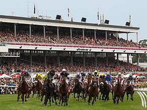 Melbourne Cup is that one race that stops the nation.