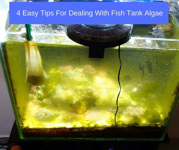 151 best betta fish tanks images on pinterest aquariums for Fish tank care