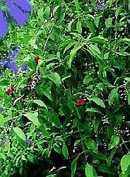 Парфюмерная нота сандаловое дерево подробнее / more info:  http://www.imagine-parfum.ru/note_info.php?id=228&main_razdel=aroma_notes