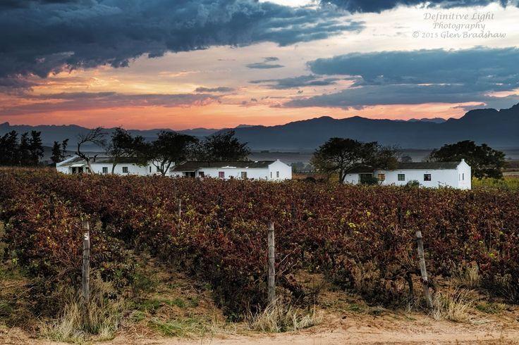 #winter #harvest #winelands