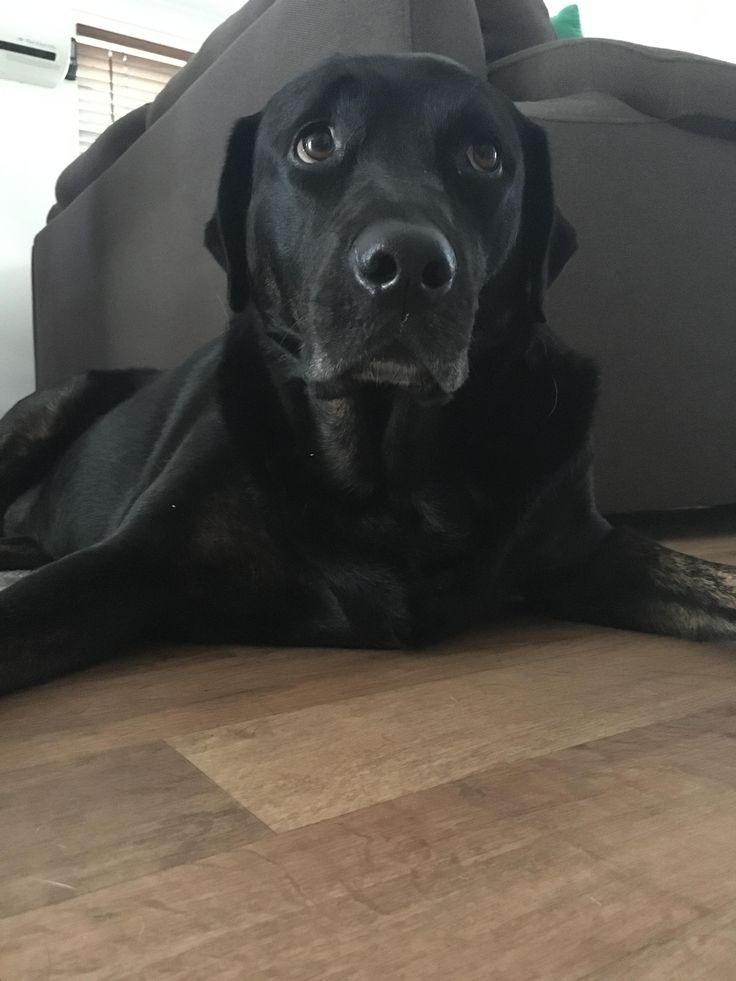 My friends lab/Rottweiler mix Betty. She's pretty chill. http://ift.tt/2iYkrz2