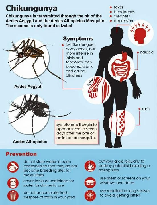 Chikungunya is an infection caused by the chikungunya virus (CHIKV).Symptoms include the fever and joint pain.These typically occur two to twelve days after exposure.Other symptoms may include headache, muscle pain, joint swelling, and a rash.The risk of death is around 1 in 1,000.The virus is spread between people by two types of mosquitos: Aedes albopictus and Aedes aegypti.They mainly bite during the day.