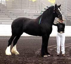 Resultado de imagen para criadores de caballos finos