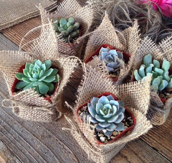 "Succulent Favors Assorted Collection. 10 Premium Succulents in 2"" pots Wrapped in Burlap - La Fleur Succulente"
