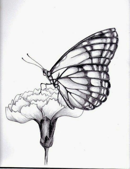 Drawings of flowers and butterflies drawing of a butterfly by on deviantart