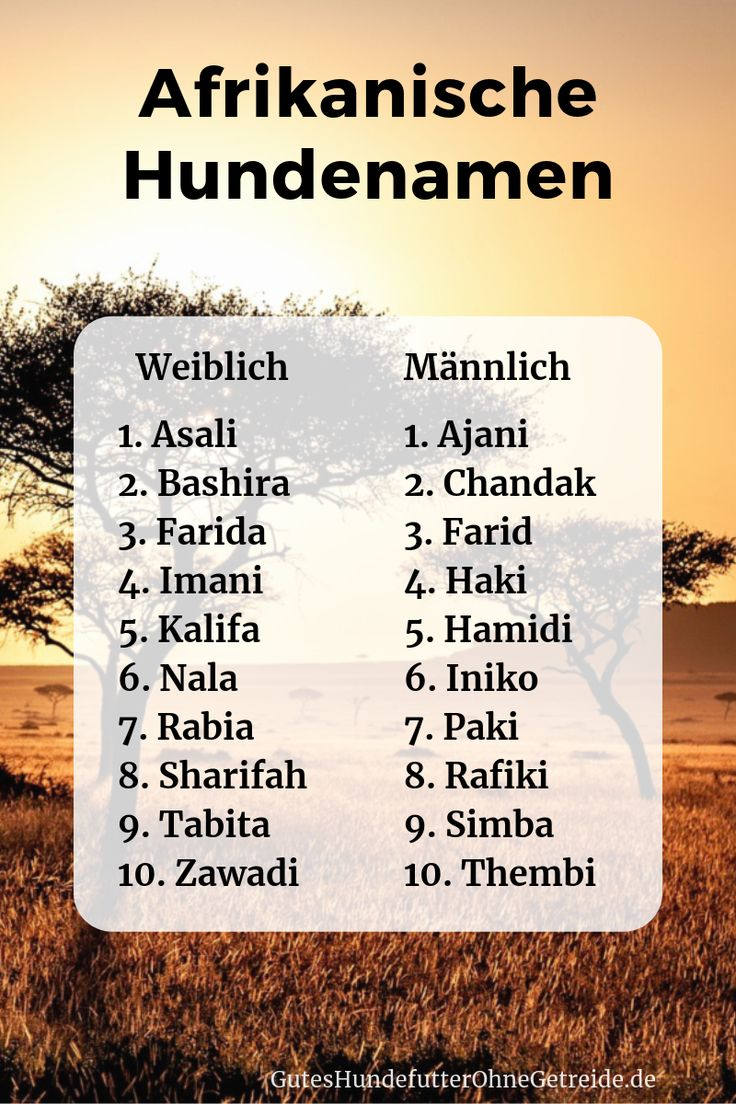 African Dog Names: Meaningful for males and females