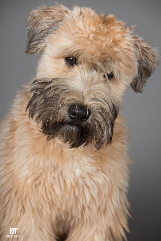 Esempio di servizio fotografico professionale per cani! #studiofotografico #Pesaro #cani #photo