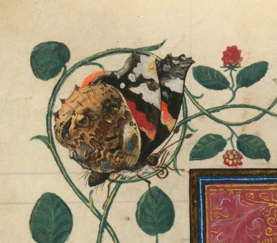 No jokes about this one, it is just BEAUTIFUL!!! A butterfly was a symbol of the soul, so the sad face might be a dim memory of the deceased. A Masterpiece by The Master of Catherine of Cleves!