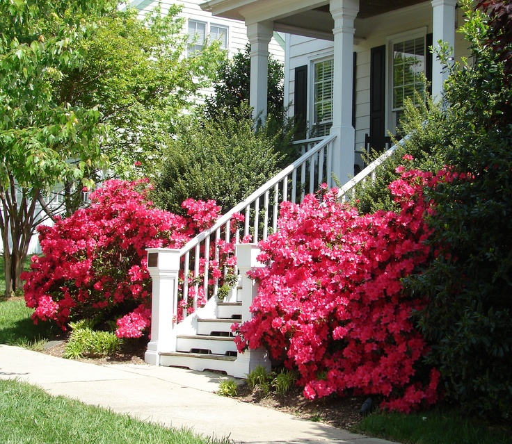 Front steps around the corner.: Porches Boards, Landscapes Boards, Shades Gardens, Front Porches, Front Step