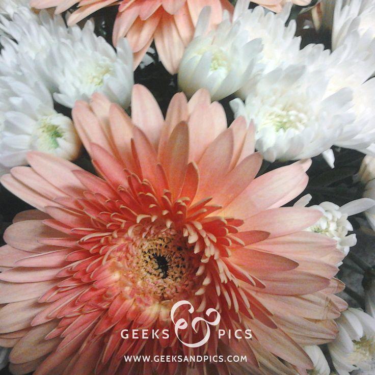 Flowers. http://www.geeksandpics.com/