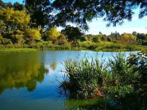Humedal Córdoba, Localidad de Suba. Lugar para el reencuentro de la naturaleza y el espíritu. Gracias Arturo Bravo