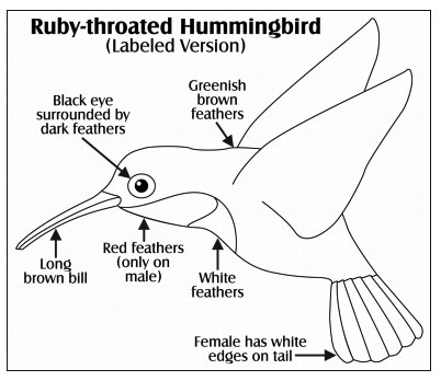 honing in on humming birds a printable science worksheet for elementary students earth. Black Bedroom Furniture Sets. Home Design Ideas