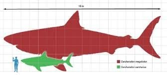 megalodon sightings national geographic - Google Search Get your golf equipment at Golf USA. www.golfusa.co.za