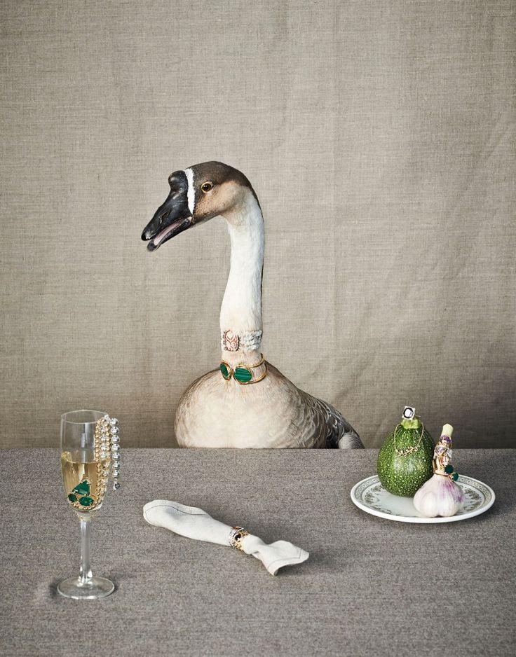 "Animal portraits titled ""Carnivores"" by dutch still life photographer Arjan Benning."