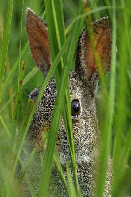 I see you seeing me. by maia bird, via Flickr