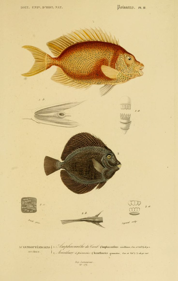 Pinterest discover and save creative ideas - Poisson dessin ...