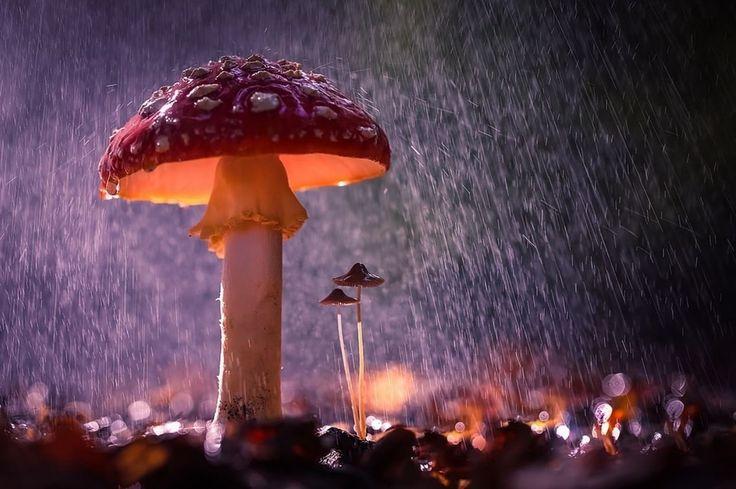 Toadstools In The Rain