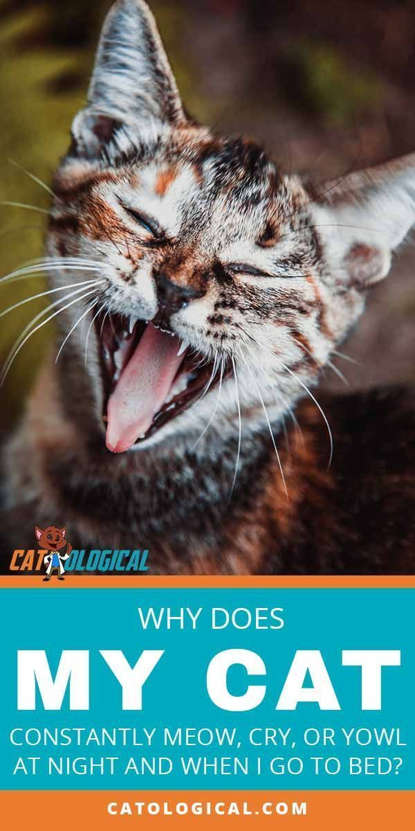 There Is Nothing That Can Get On The Nerves On Even The Biggest Cat Lover As Much As The Howls Of Their Favorite Cat Meowing At Night Cat Behavior Calming Cat