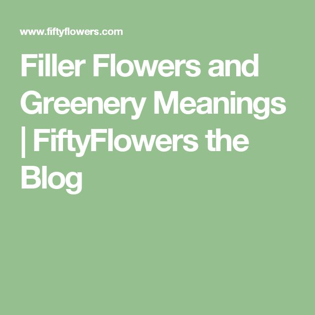 Filler Flowers and Greenery Meanings | FiftyFlowers the Blog