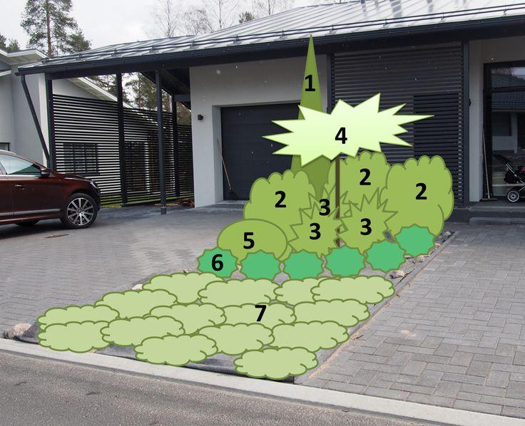 1. Kapeakasvuinen kataja tai timanttituija (ainavihanta) 2. Alppiruusu (ainavihanta) 3. Kevätatsalea 4. Rungollinen hortensia 5. Pesäkuusi tai siilikuusi (ainavihanta) 6. Matalakasvuinen jaloangervo 7. Sinilaakakataja ja/tai tuivio (ainavihanta) + kanadanruohokanukkaan istutusten alle maanpeittokasviksi