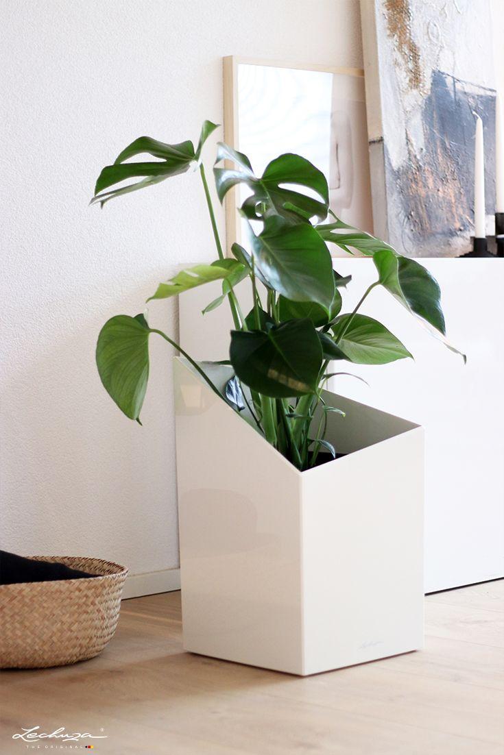 Monstera Must Have Pflanzen Pflanzgefasse Zimmerpflanzen