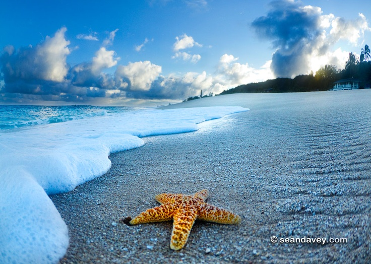 A starfish on the beach at sunrise.