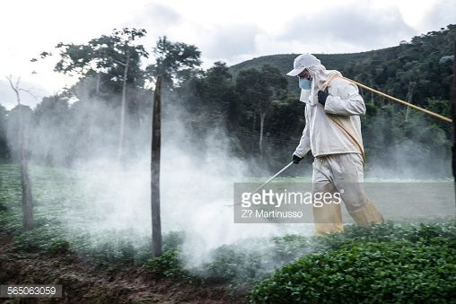 Stock Photo : Agriculure