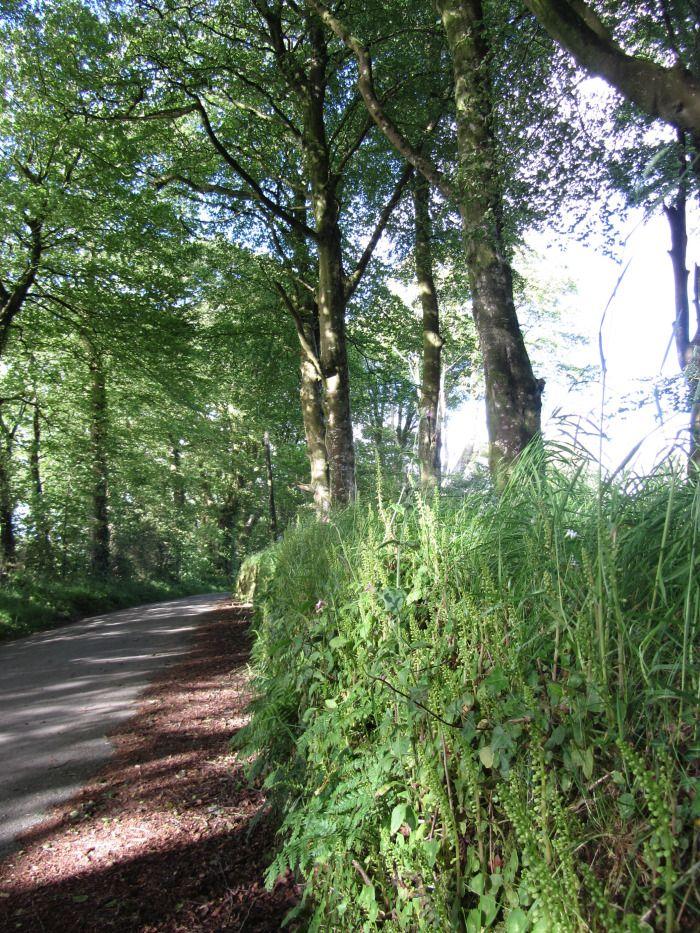 THE GREEN WALL WALK [CORNWALL, UK]
