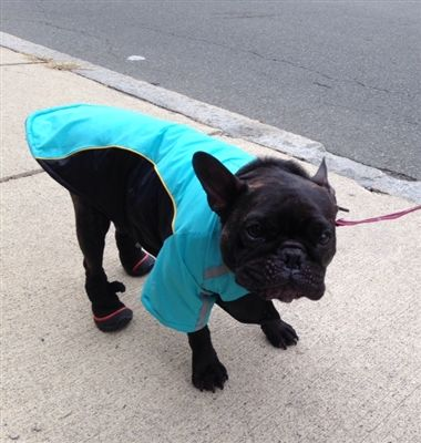17 Best images about Dogs Wearing Boots & Shoes on