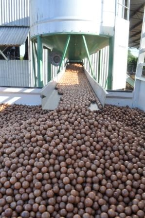 Barenuts is a small macadamia grower based in Bauple, between Gympie and Maryborough. Baernuts manufactures and produces a range of macadamia inspired products on farm in a fully certified gluten free kitchen. Our products include gluten free slices, muesli's and macadamia butter.   Our orchard comprises 600, 35 year old trees and 1300 newer variety macadamias. We are an accredited grower with Suncoast Gold Macadamias, Gympie.