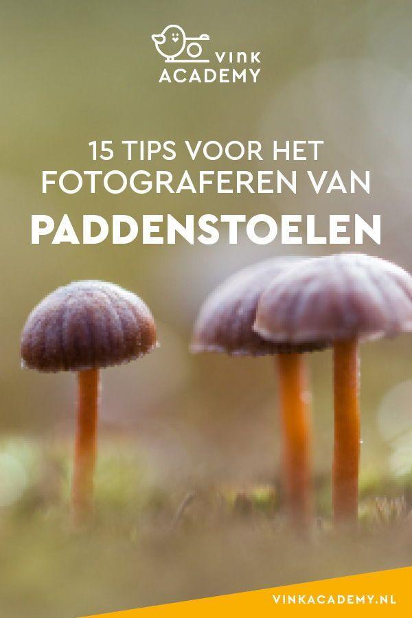 15 Tipps zum Fotografieren von Pilzen