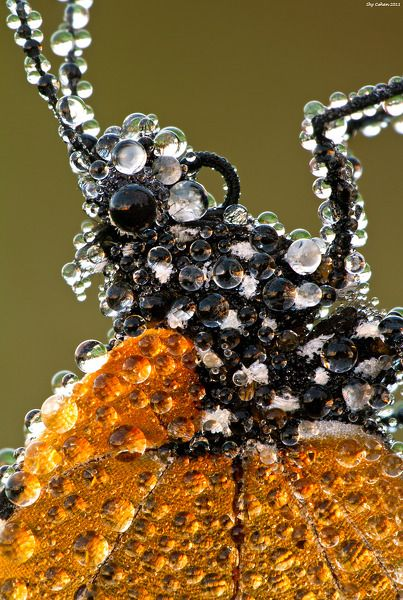 Butterfly covered in dew drops