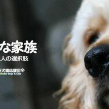 保健所犬猫応援団のブログの画像