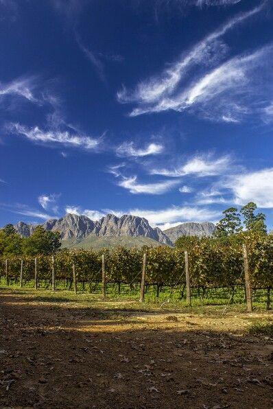 Lourensford wine farm, South Africa. https://m.facebook.com/LesterSpencePhotography