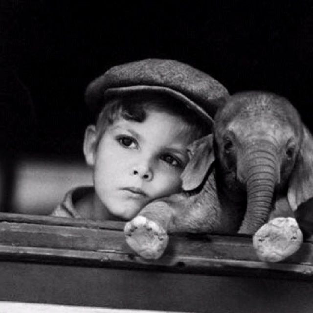Elephant :): Picture, Babies, Animals, Sweet, Baby Elephants, So Cute, Boy, Photography