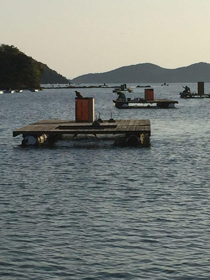 若狭本郷の筏
