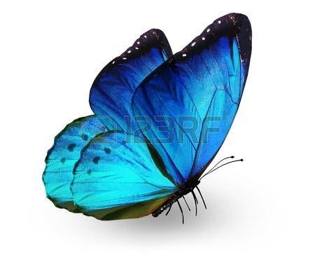 Mariposa azul, aislados en blanco photo